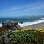 Blumenwiesen an der Küste